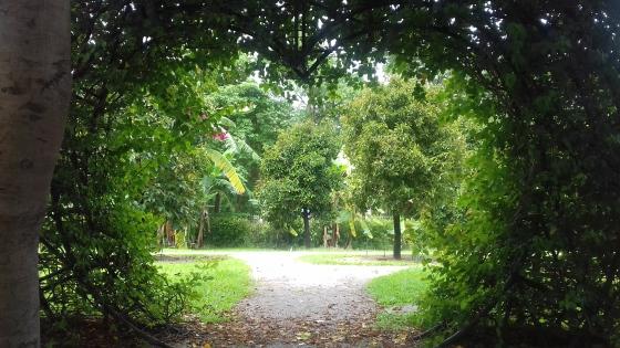 Chiang Mai park